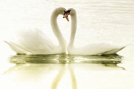 Lovers Reklamní fotografie