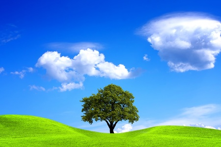 Oak tree and blue sky photo