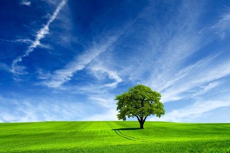 over the hill: Naturaleza
