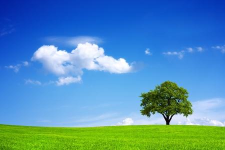 Ecosysteem