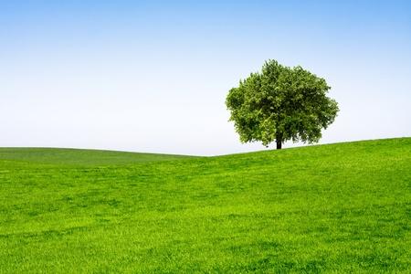 arboles frondosos: Árbol