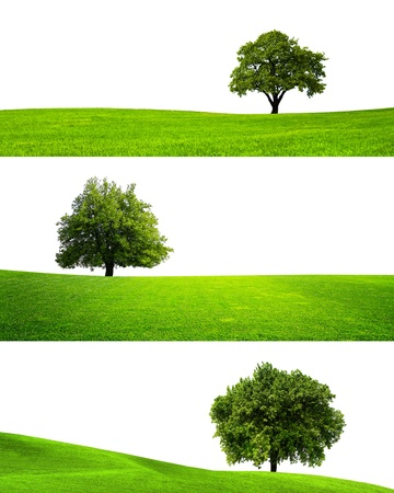 leafy: Collection of isolated green tree Stock Photo