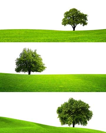 individui: Collezione di isolati albero verde Archivio Fotografico