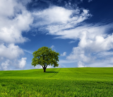 Oak tree on a cloudy day