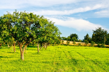 Country green landscape photo