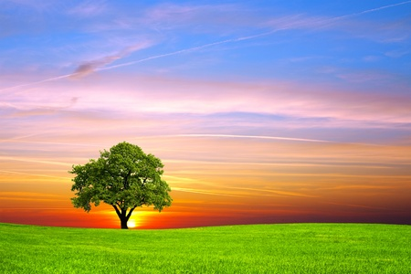 Baum auf dem Feld Standard-Bild - 11571994