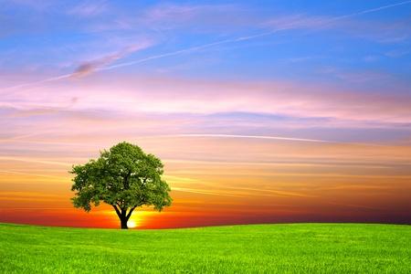 Tree on the field Stock Photo