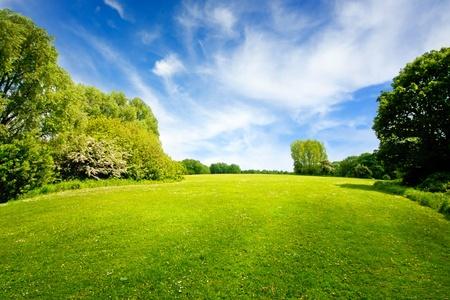 Campo verde y cielo nublado