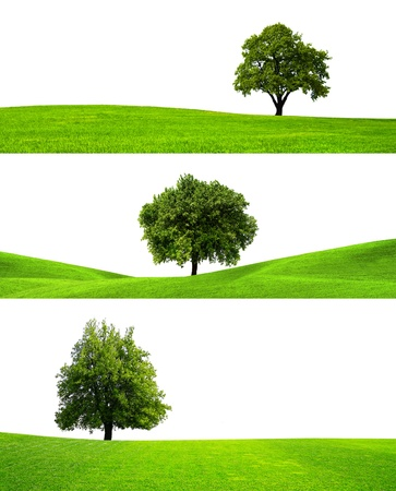 Three trees Stock Photo