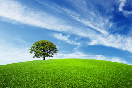 Green tree on green field