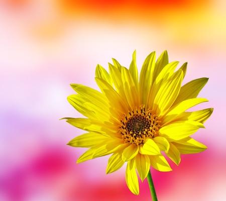 bright future: Spring Flower