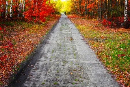 destin: Couleurs de l'automne Banque d'images