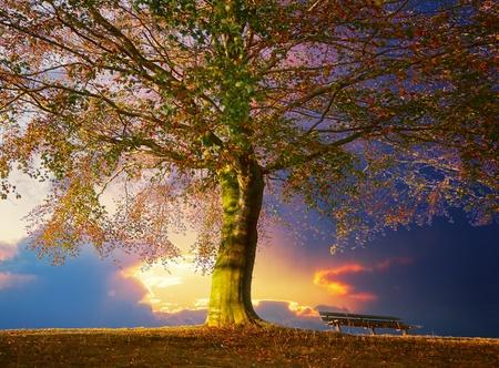 Albero nel parco