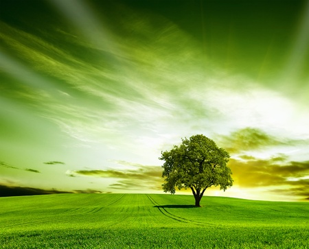 roble arbol: Verde paisaje Foto de archivo