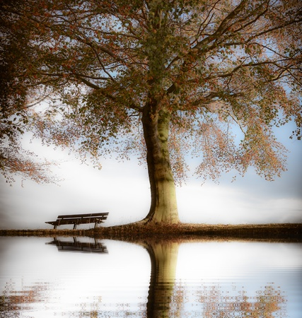 Old wooden bench in autumn park photo