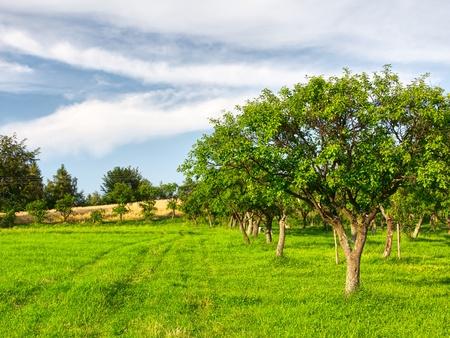 Fruitbomen in een zomer boomgaard