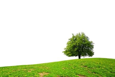 arbol de la vida: Primavera verde