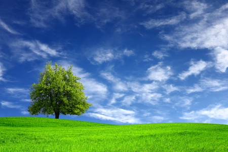 green earth: Green meadow and tree Stock Photo