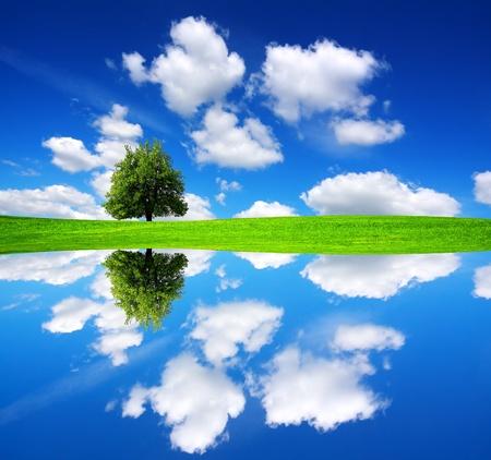 oasis: Green oasis