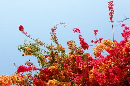painterly: Flowering shrub