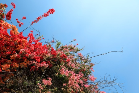 Tropical Flowering Shrubs photo