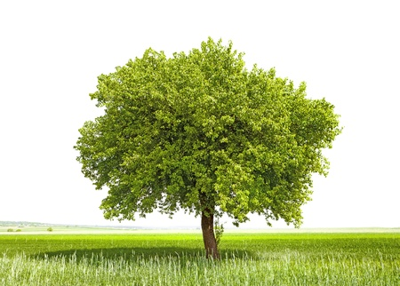 recycle tree: Green tree - symbol of a Green Planet Earth Stock Photo