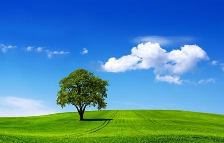 Eco landschap
