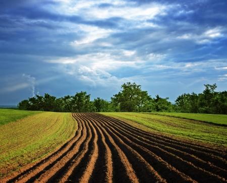 agriculture wallpaper: Rural landscape