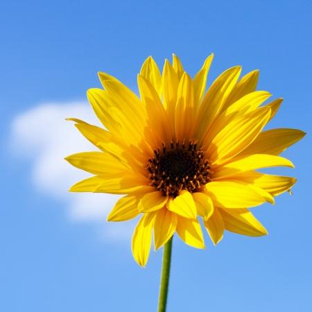 pedicel: Autumn yellow flower