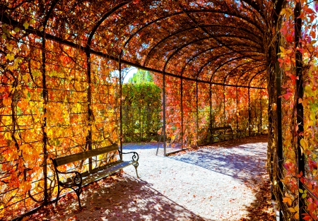 Deep red plant tunnel with autumn leafs photo