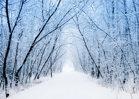 winter scenery: Winter Stock Photo
