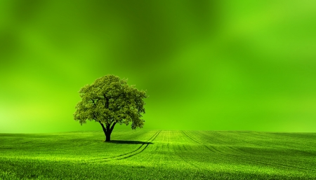 Green earth photo