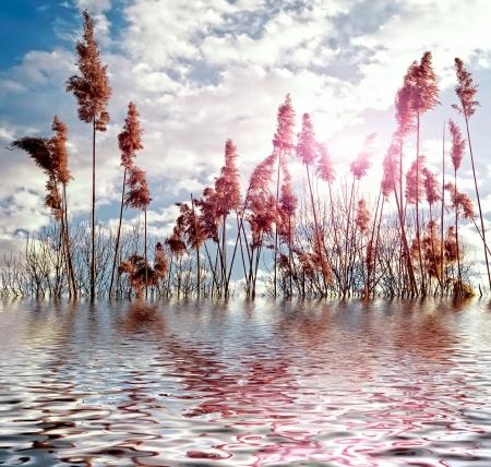 Magic nature photo