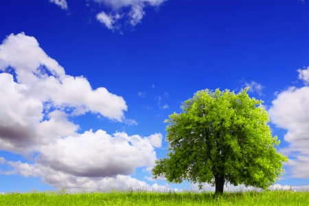 Spring landscape with green tree photo