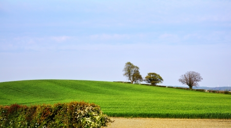 Springtime landscape photo