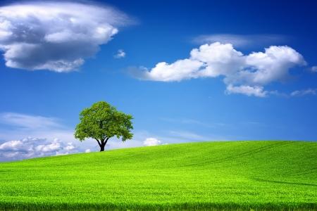 Groen landschap