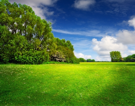 Green spring field and blue sky Stock Photo
