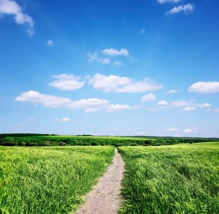 blue sky and fields: Beautiful summer landscape