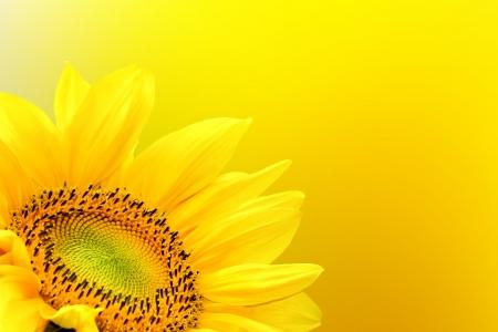 Sunflower on summer background Banque d'images