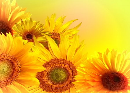 Un ramo de girasoles photo