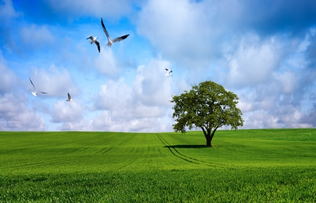 Tree on green meadow photo