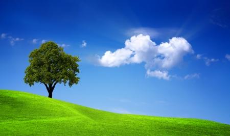 Campo verde del roble