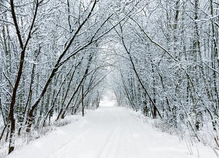 雪の林の路地 写真素材