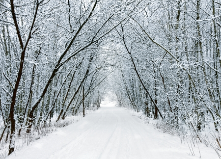 Snow forest alley Stock Photo