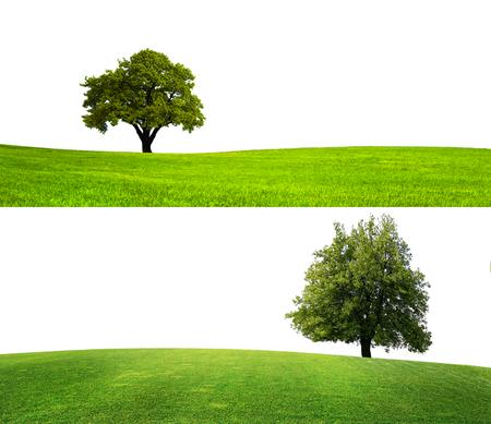 緑の自然の季節