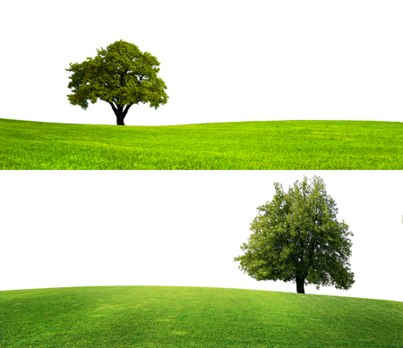 Groene natuur seizoen