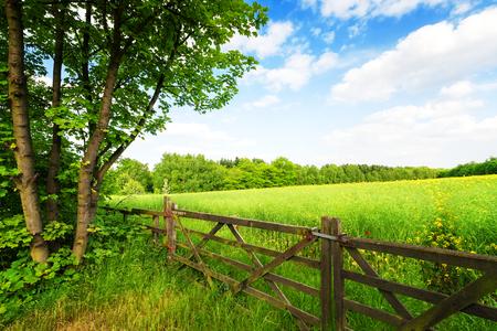 青空の下で緑の野原でフェンスします。 写真素材