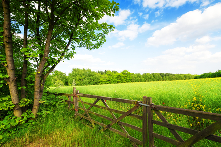 pasture fence: Fence in the green field under blue sky