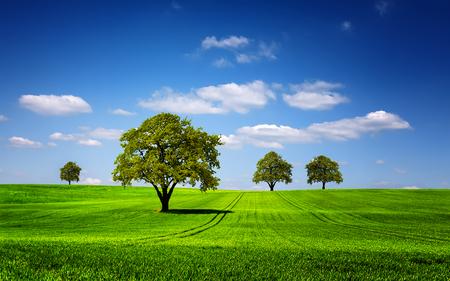 緑の自然の風景