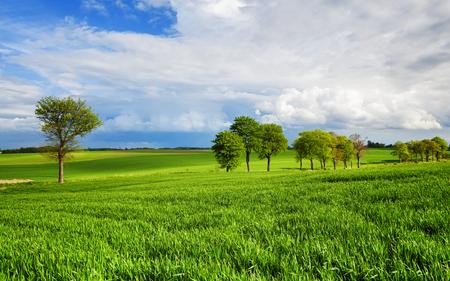 medio ambiente: Medio ambiente